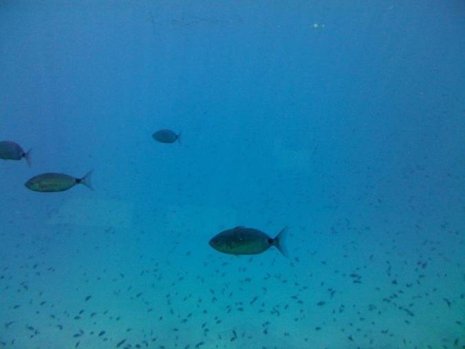 lumea submarina 2
