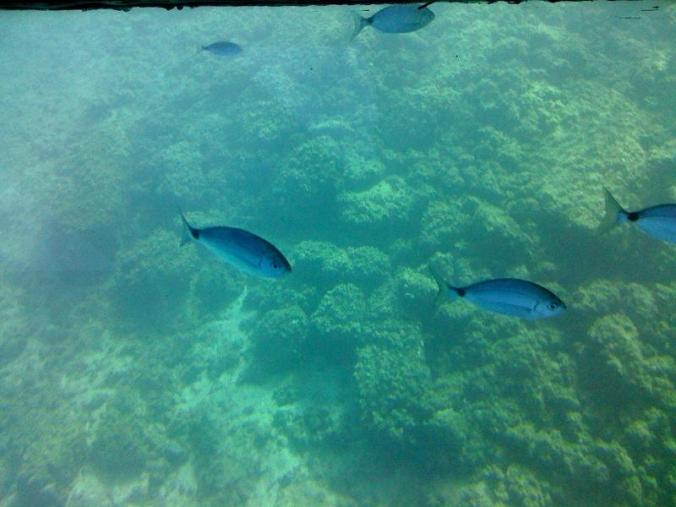lumea submarina